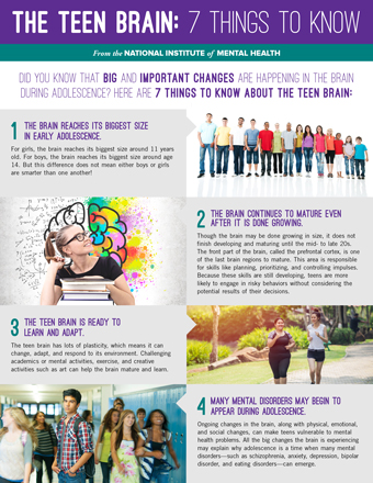 Teen Brain Fact Sheet Image